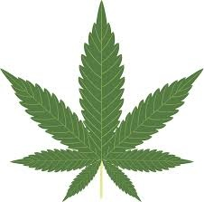 Cannabis CBD Marijuana Cannabinoid Dispensaries